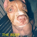 THE BEEF 2