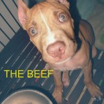 THE BEEF 4