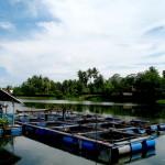 Bangka View