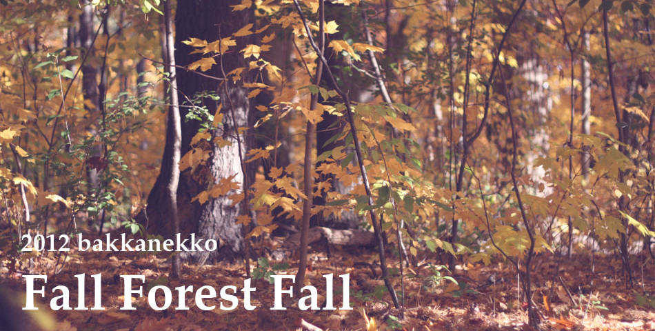 Fall Forest Fall